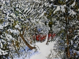 overnight snowfall 18 40 x 40