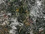 overnight snowfall 22 50x25