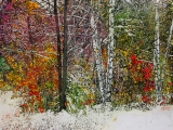 overnight snowfall winter datecrashed autumns party 26x34