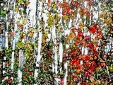 lakeside birches 6 18 x 18