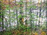 tamarack pond 16.5 x 17.5