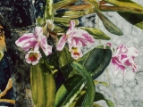 orchid st kitts 16x22