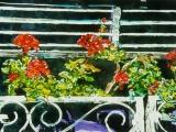 geranium balcony lido 10x16
