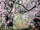 magnolia-18-28x40-
