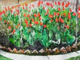 tulips-in-the-round-2-22x30-